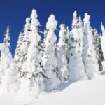 Поет зима, аукает…  (С.Есенин)
