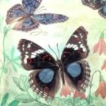 Александр Разбойников. Бабочки