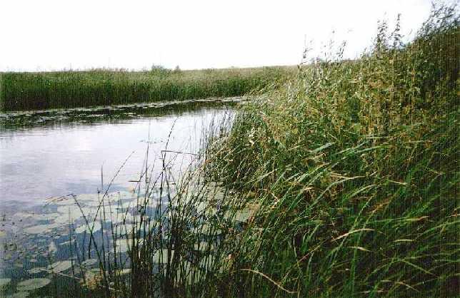 река Солончанка