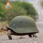 Суровые челябинские черепахи