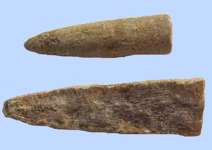 Белемнит - древний моллюск