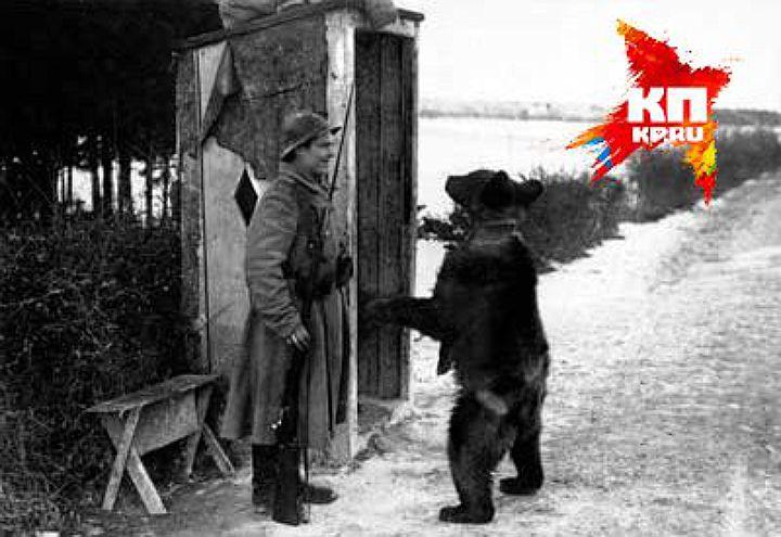 Уральский мишка на войне