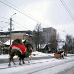 В Челябинске по трамвайным путям ходят верблюды, лошади, но только не трамваи