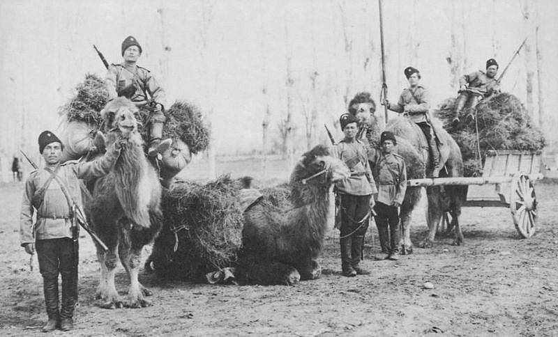 Оренбургские казаки с верблюдами