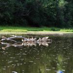 24 Сплав по реке Белая (Агидель)