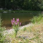 46 Сплав по реке Белая (Агидель)
