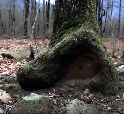 Камнееды