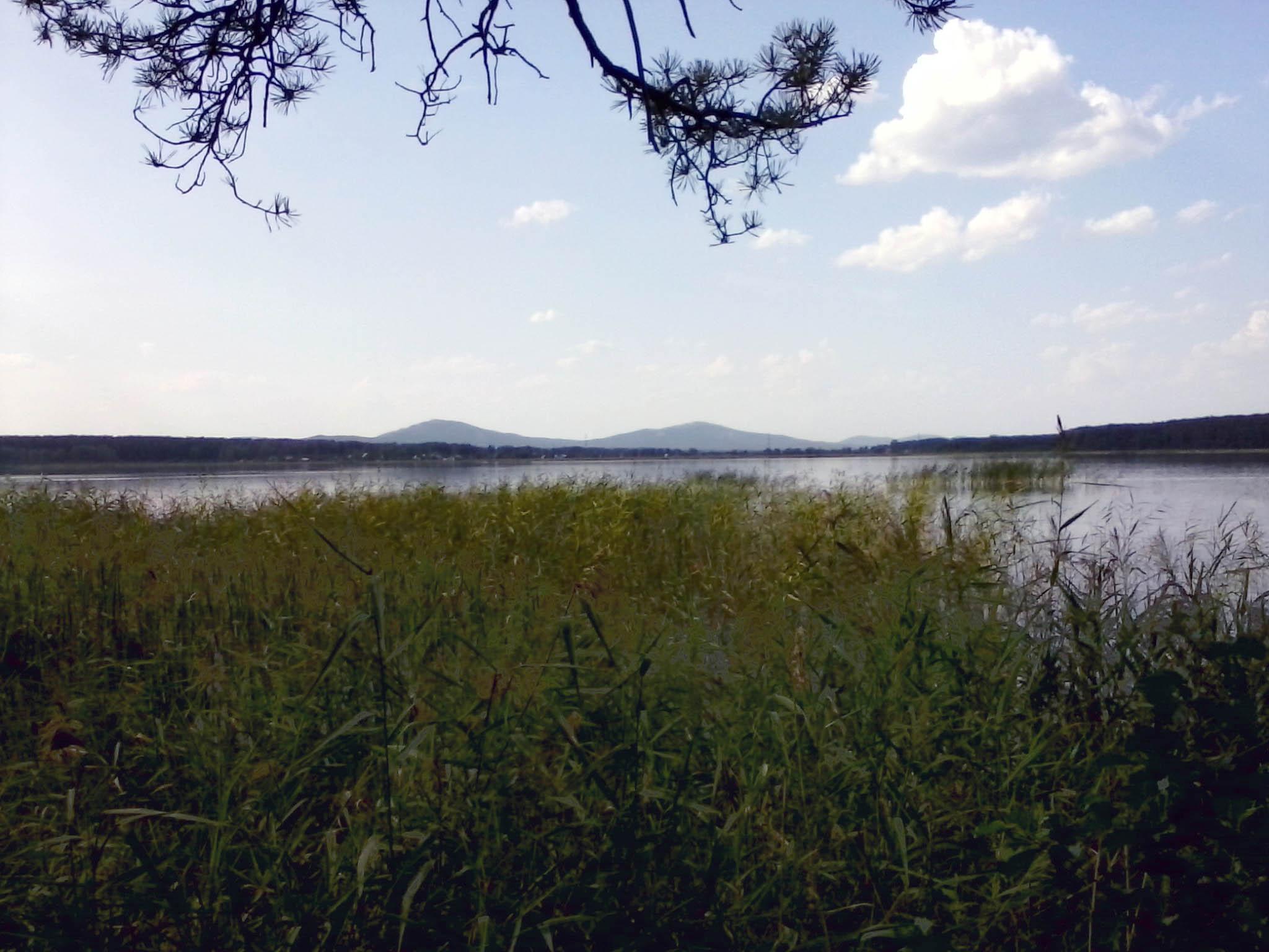 Озеро Анбаш, камыши